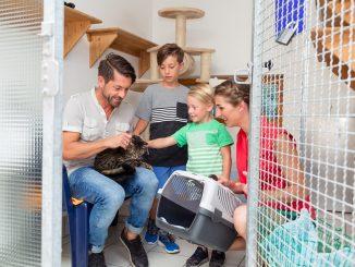 10 questions à vous poser avant d'adopter un animal de compagnie